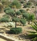 Giardino botanico, Agrigento