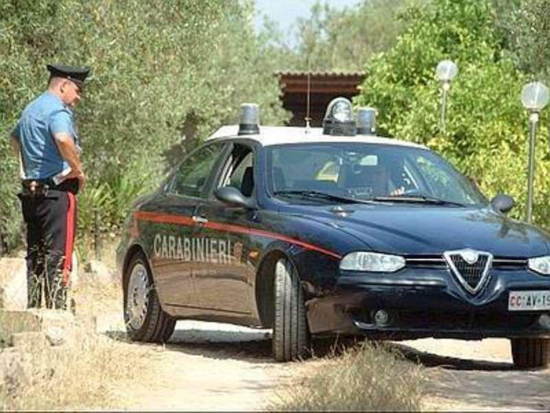 Piantagione di marijuana tra ulivi e fichi d'india: blitz dei Carabinieri