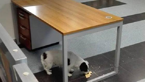 Un cane al Pronto Soccorso, la foto fa il giro della città: la replica dell'azienda ospedaliera