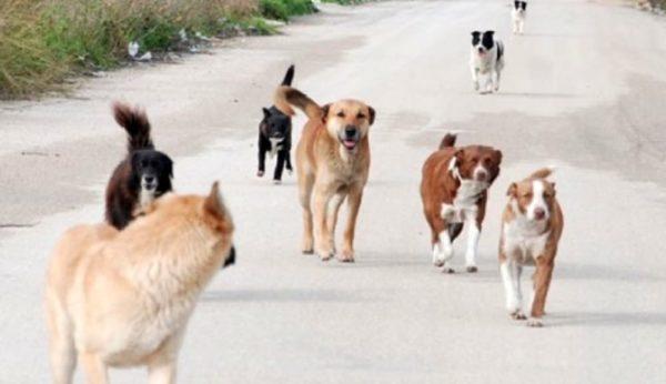 Aggredita da un branco di cani randagi, salvata dal marito