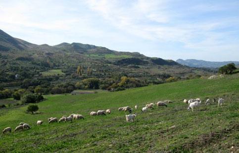 Anche a Santo Stefano di Quisquina si protesta per i prezzi del latte