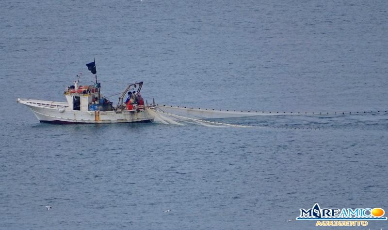 """Pesca, l'allarme di MareAmico: """"Il novellame non va pescato"""""""