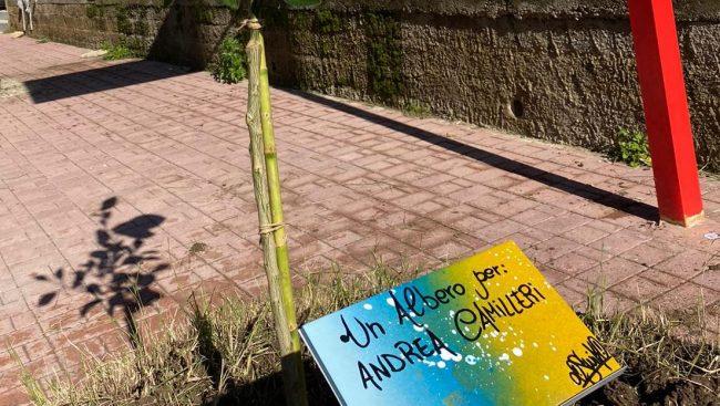 Piantati decine di alberi per ricordare i grandi siciliani