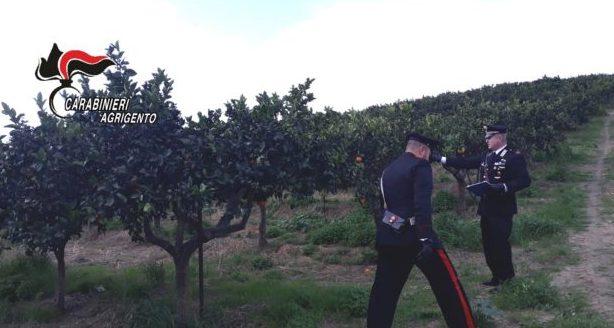 La piaga del caporalato anche nell'agrigentino, un arresto a Ribera